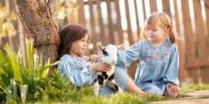 Geschwistershooting mit einer Ziege