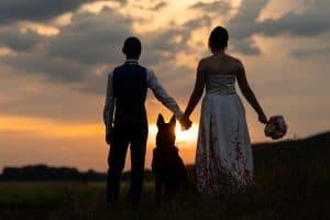 Hochzeitsshooting Sonnenuntergang Brautpaar Hund